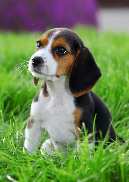 Pet Vaccinations in Bonita Springs, FL
